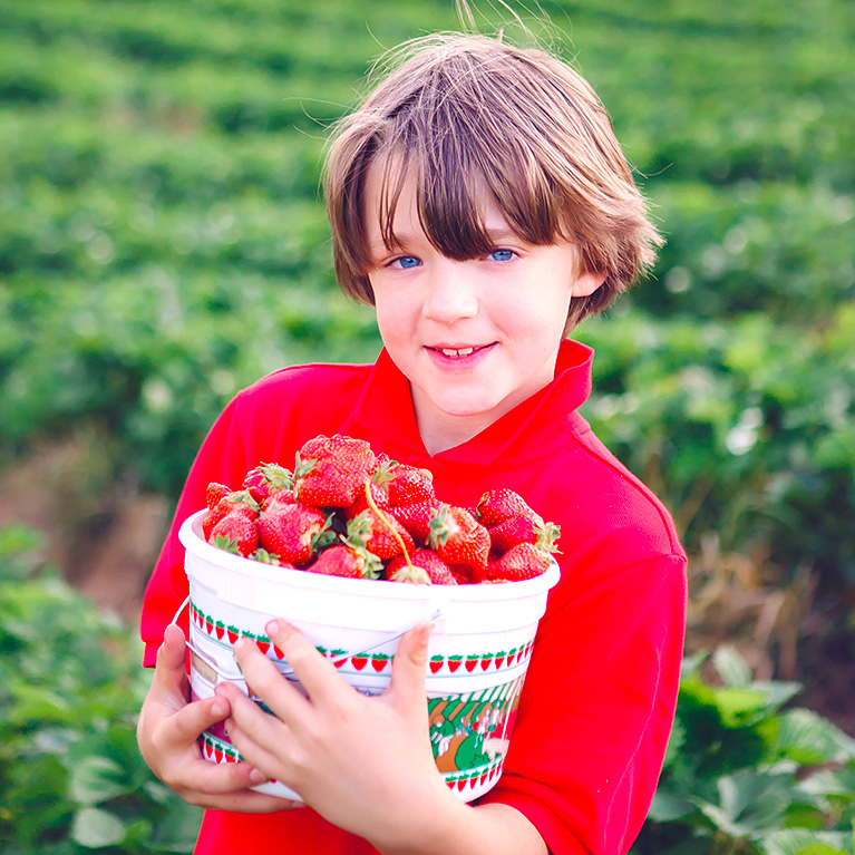 Spend a day out in the sunshine with the family picking farm fresh strawberries!